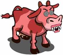 Mad pink cow disease